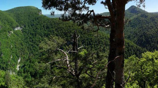 1 Дорога из Гуамки на альпику (1)