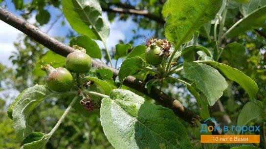 1 Горный сад в черте города Хадыженска - участок 60 (6)