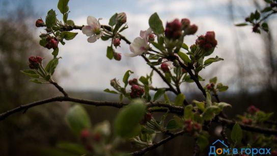 1 Горный сад в черте города Хадыженска - участок 60 (7)