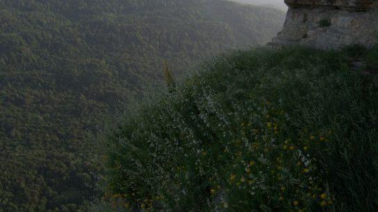 1 Орлиные полки в скале над Мезмаем (8)