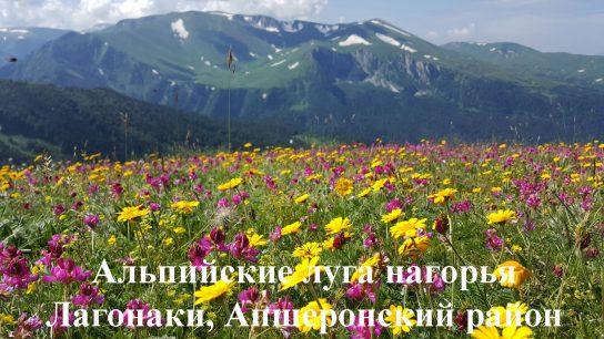 Альпийские луга нагорья Лагонаки в Апшеронском районе