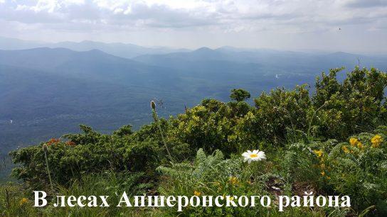 В лесах Апшеронского района